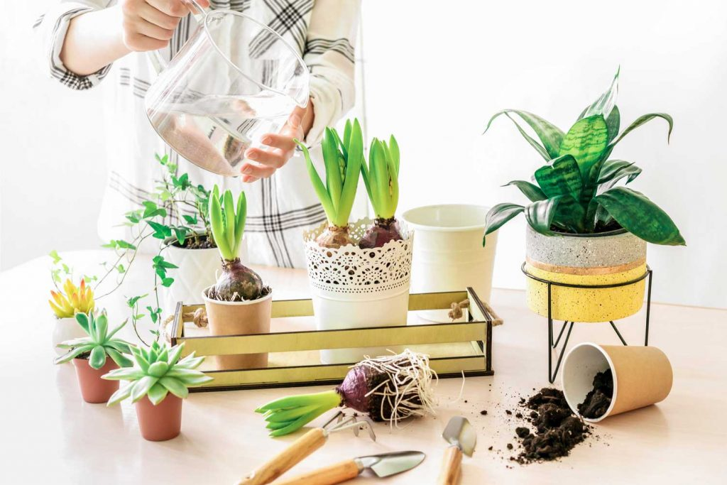 Indoor hobbies: indoor gardening